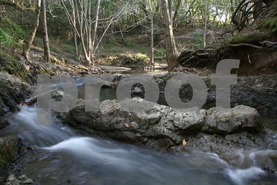 Day 16 - Miller Creek (Marinwood Park)