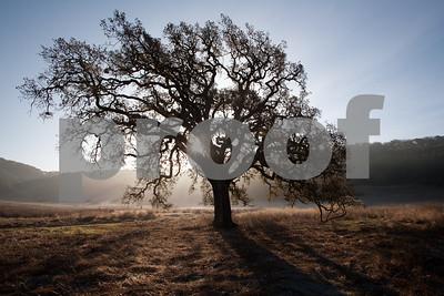 Day 349 - Morning Oak, Rush Creek
