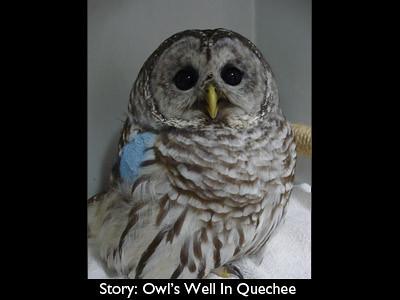 owl-big
