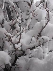 Cotton Ice