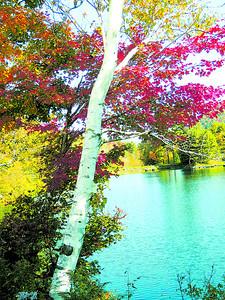 woodard reservoir in Plymouth vermont 039