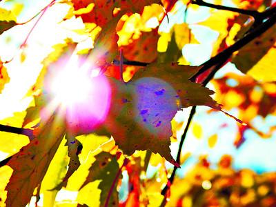 leaves in field on Bailey Mills Rd