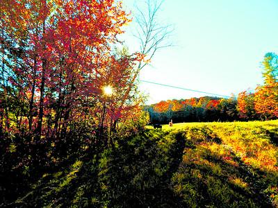 field on Bailey Mills Rd