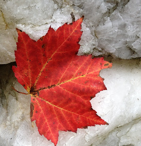 Barnard leaf on crystal - Ellen Miles