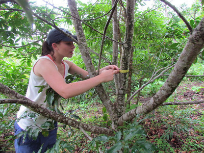 Sophie Leiter measuring tree planted in previous work trip
