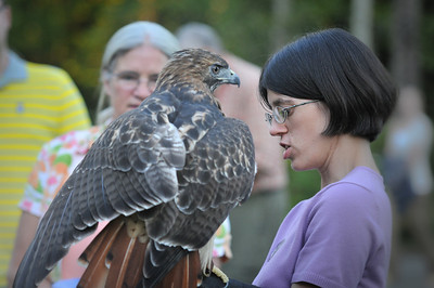 Hannah Putnam shows the Red Tailed Hawk 2