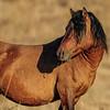 band 1 stallion - still keeping an eye on band 2