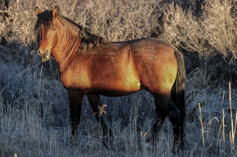 band 1 - stallion, these pictures were taken early in the morning as the sun was coming over the moutains causing the yellow tinge to show on them
