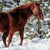 found some old friends today.....they sure put on a good show for me.  This band of horses is the very first wild horses that I photographed so I have a soft spot for them  especially after the first snow storm.