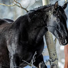"this horse was named ""Black Beauty"" by an avid photographer looking at my pictures."
