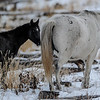 band 6 - white mare and black foal