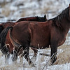 band 6 - stallion