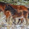 Band 19 - foal