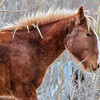 Alberta Wild Horses - these are Elbow Falls bands and hey have some different looks