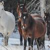 band 6 - white mare