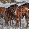 Band  18 - stallions
