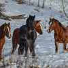 Band  18 - stallions - all stallions