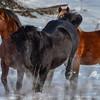 Band  18 - stallions kicking