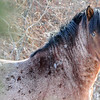 band 16 - powerful stallion