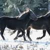 band 22 - stallions