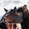 Alberta Wild Horses - nice eye shadow