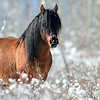 band stallion