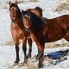 band 2 - mare &  stallion