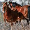 band 3 mare & stallion