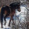 band 6 - colourful band, stallion