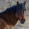 band 1 - stallion