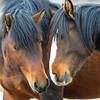 band 8 - stallion & mare
