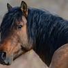 band 1 stallion