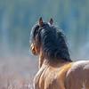 band 3 - stallion