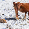Band 2 - 1 new foal & mom