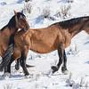 band 2 - 2 stallions