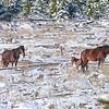 Band 9 - 2 new foals