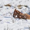 band 2 - foal