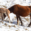 band 2 - foal & mom