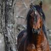 band 11 - stallion