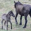 band 12 - foal & mom