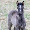 band 12 - foal