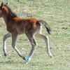 band 10 - foal