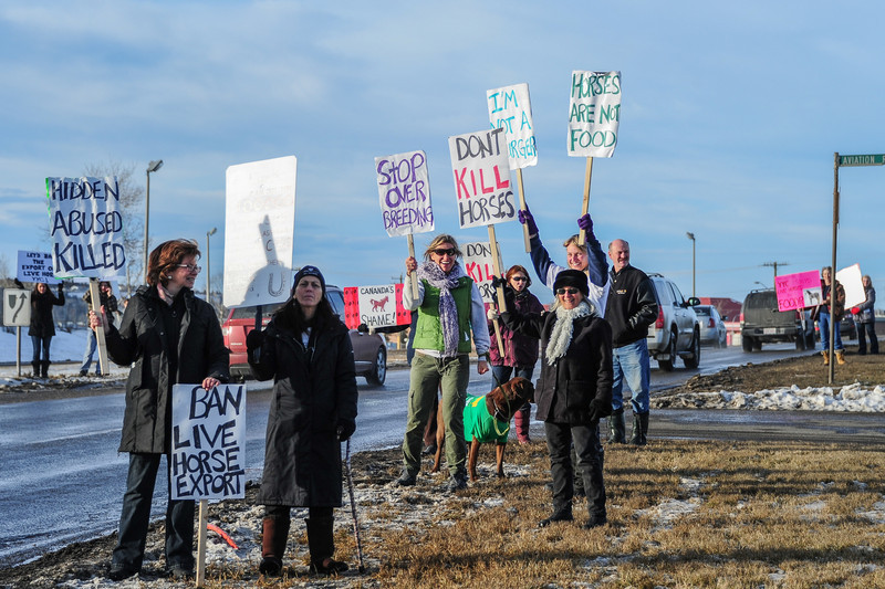 Peaceful protest Bill C -322 stop killing horses!  This protest was happening today (Saturday) about 3pm on McKnight Blvd near the airport.
