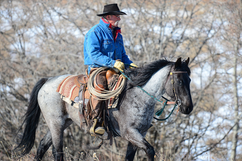 This was shot near Longview...we were watching some Bald Eagles feeding on a carcass and out of the creek bed came this Alberta Cowboy.  His name is Tim and he works  on the large cattle ranch where we stopped.<br /> The horses name is Little Blue,,