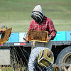 the bees were absolutely everywhere....it made me nervous being 75 feet away and still lots of bees around me to...