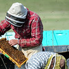 how the heck can you be picking something out of that mess of live bees?