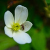 wild flowers & a grasshopper