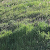 3 pups near the den....you can see the den it is located right below the 2 pups