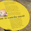 things you didn't know about canola