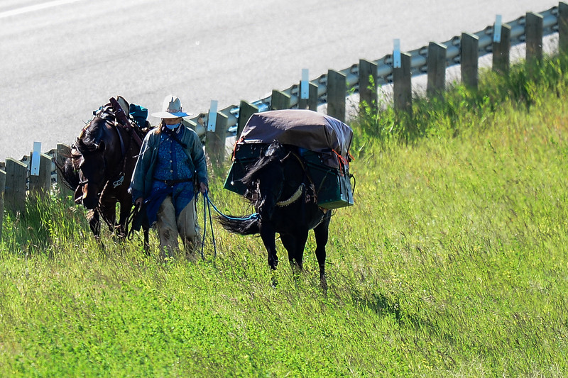 """I was fortunate to find this lady and her horses doing what she calls """"long ride.""""  You can read about """"the Sun and the Wind"""" rides north.....Long Ride"""" posts on her blog at this link:  <a href=""""http://fiain-skuld.blogspot.ca"""">http://fiain-skuld.blogspot.ca</a><br /> Catherine I wish you all the best on your 2013 Long Ride.  It was a pleasure to meet you for the short time as you headed down the long road.   I hope you like some of the pictures here, trying to depict you and your horses <br /> doing what you love.  Thanks for the experience, it has generated an interest to follow you along your journey through your blog.  I would be glad to provide any pictures you like free of charge...just contact me.<br /> <br /> Duane"""